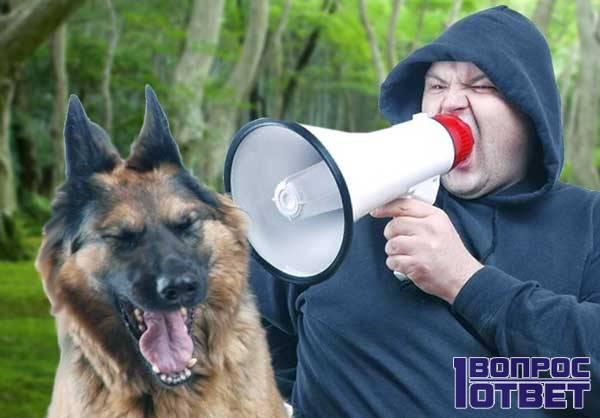 Ошибка дрессировки собаки: агрессия