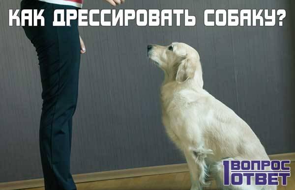 Как правильно дрессировать собаку в домашних условиях