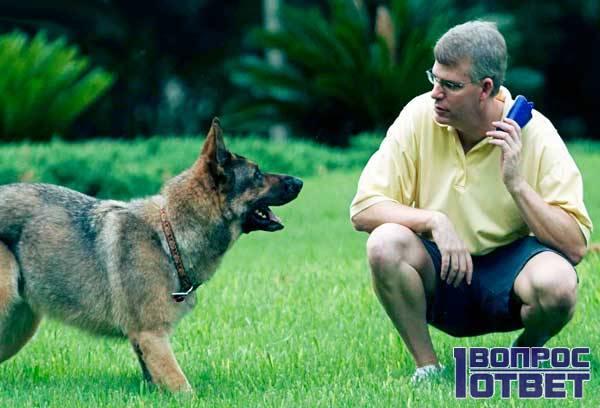 Собака доверяет дрессировщику