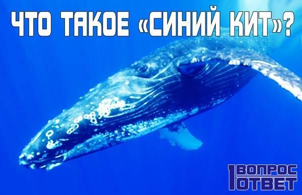 «Синий кит» - что это