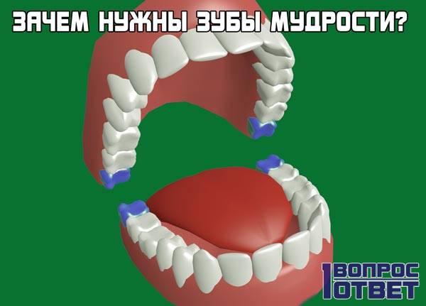 Для чего нужны зубы мудрости?