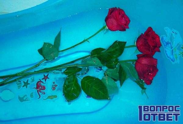 Розы лежат в ванной