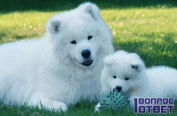 Красивый пушистый щенок с мамой