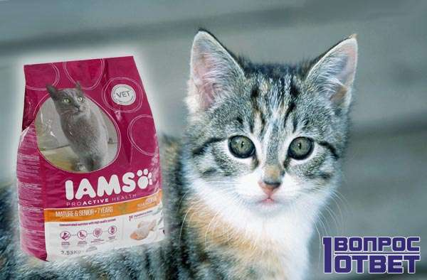 Корм для кошек Jams