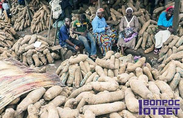 Продажа ямса в нигерии