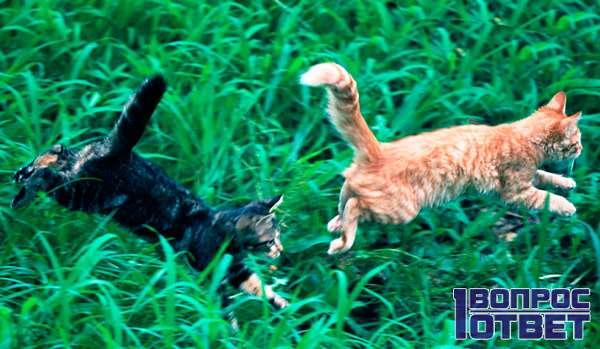 Кошки мчатся от собак