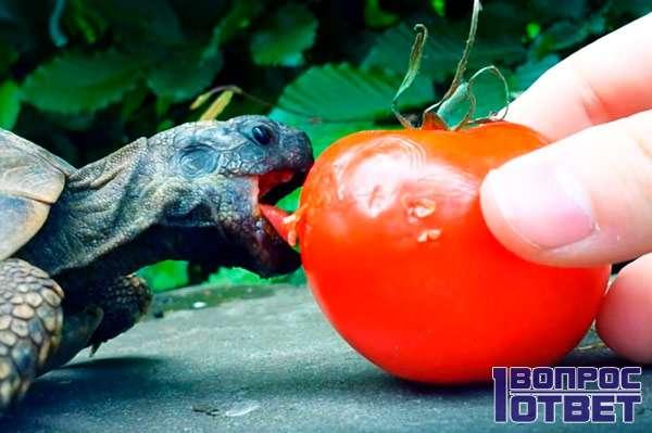 Рептилия питается растительной пищей
