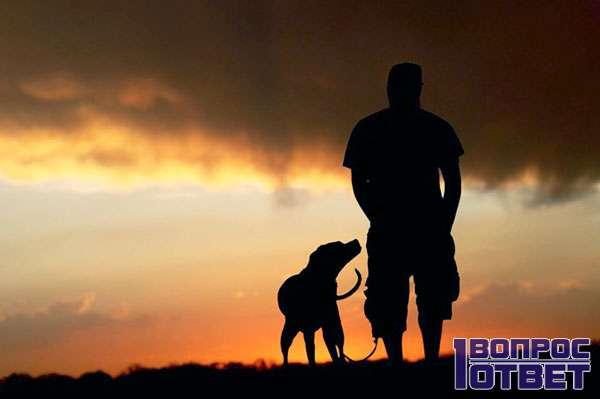 Мужчина без пары - только собака