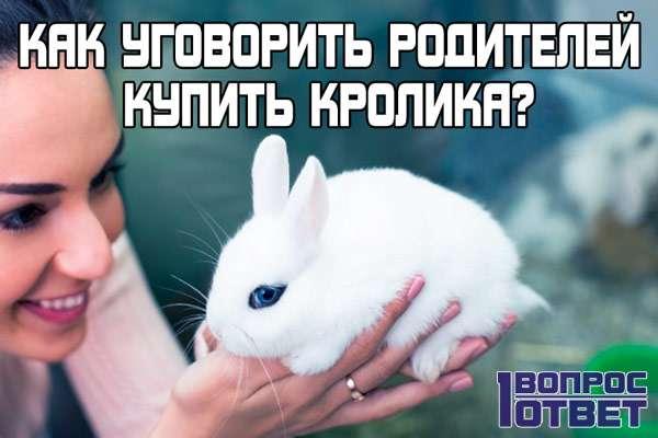 Как можно уговорить родителей купить вам кролика?