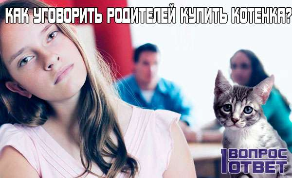 Как можно уговорить родителей купить котенка?