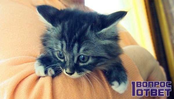 Маленький котенок на руках