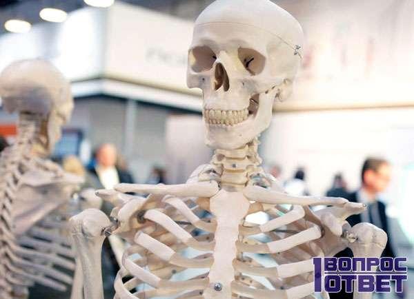 Скелет из костей