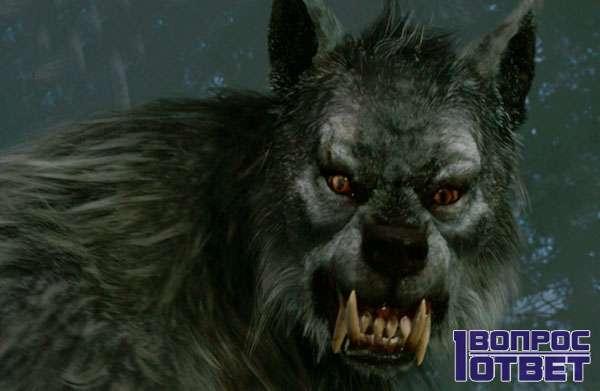 Страшный полу-волк (вервульф)