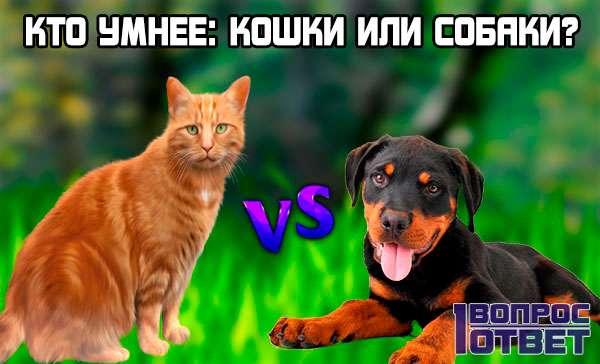 Собаки или  кошки – кто умнее?