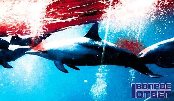Кровавая вода и животные