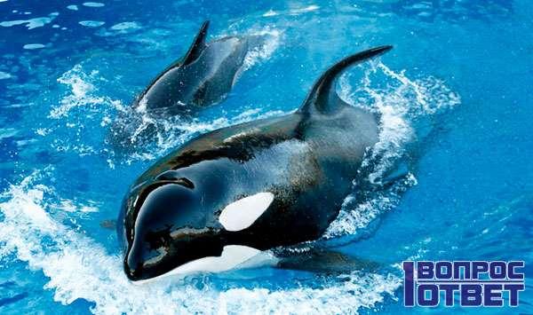 Исчезающие дельфиновые