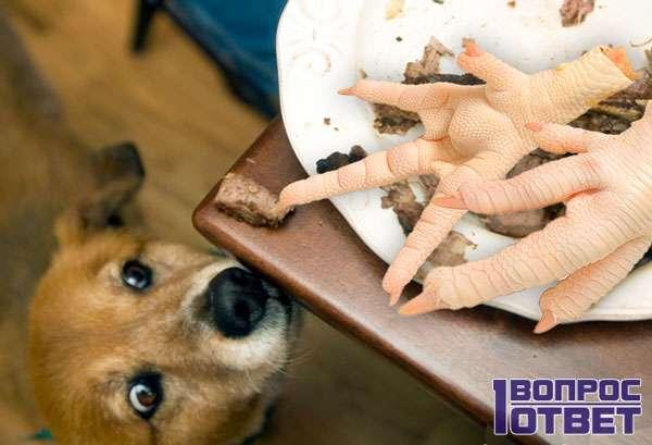 Собака и тарелка субпродуктов