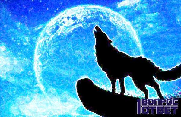 Волчий силуэт на фоне луны