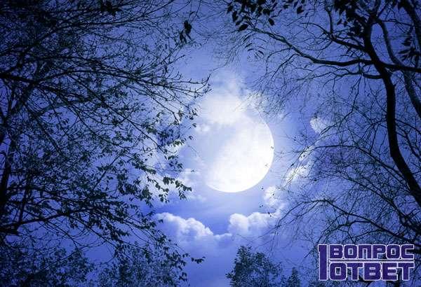 Спутник Земли ночью среда деревьев