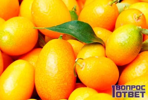 Овальные плоды кинкана