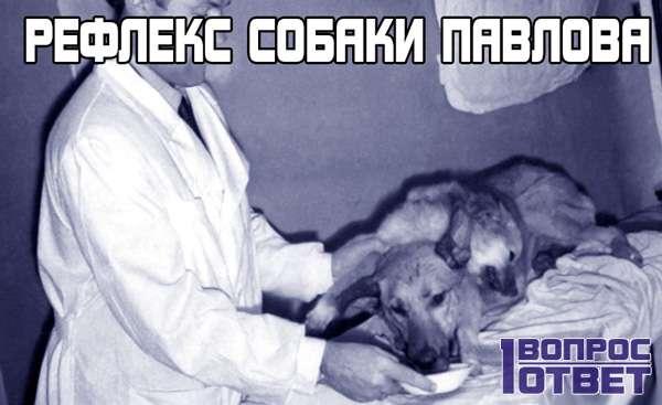Рефлекс собаки Павлова.